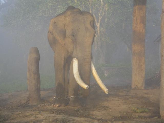 2011dec28_chitwan_morning_birdwat_2