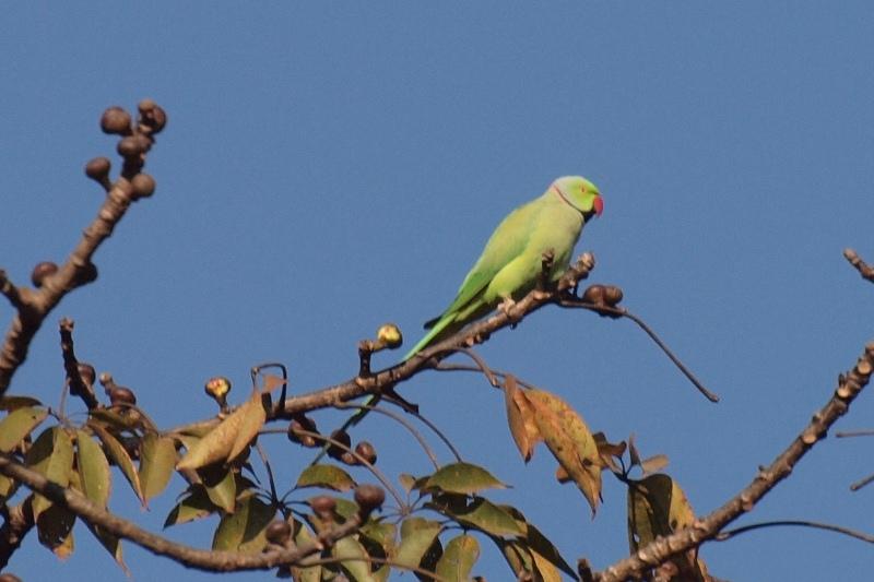 2011dec30_pokhara_phewa_tal008