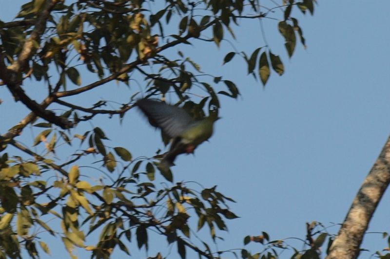2011dec27_chitwan_jungle_walk250