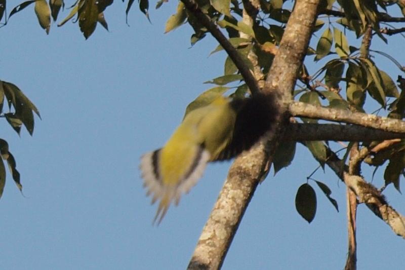 2011dec27_chitwan_jungle_walk251