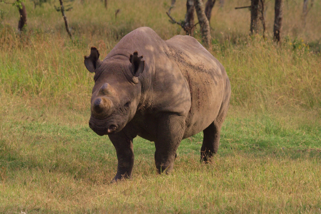 2012july26_sweetwaters_black_rhino_