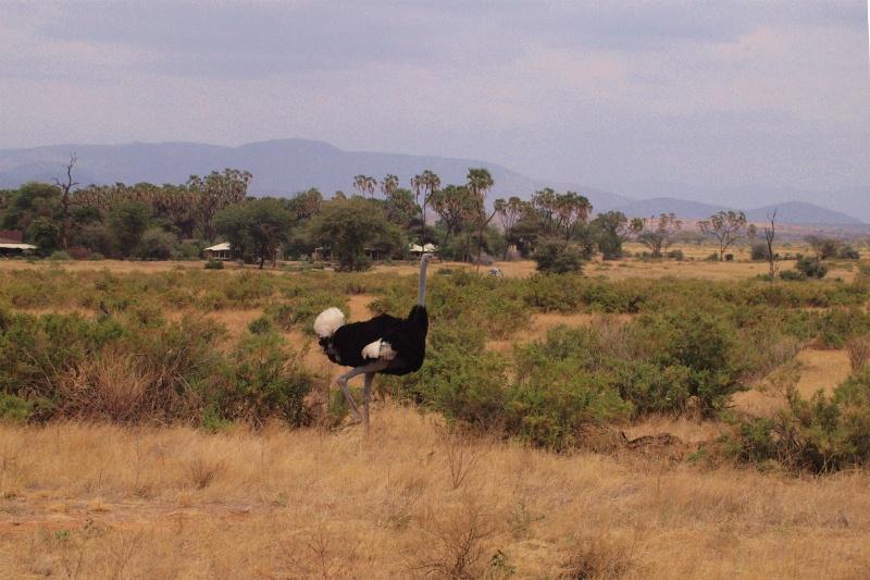 2012july27_samburu_farst_drive_soma
