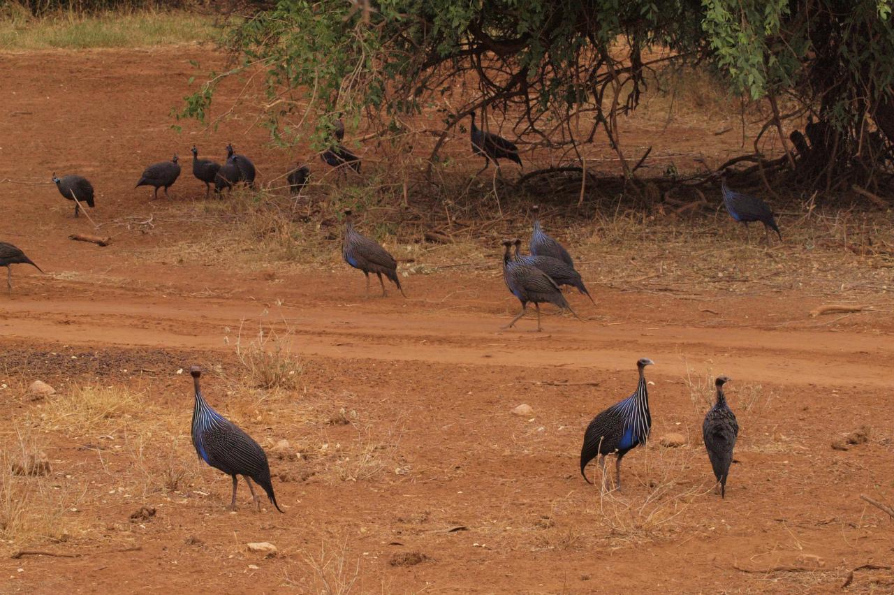 2012july27_samburu_farst_drive_guin