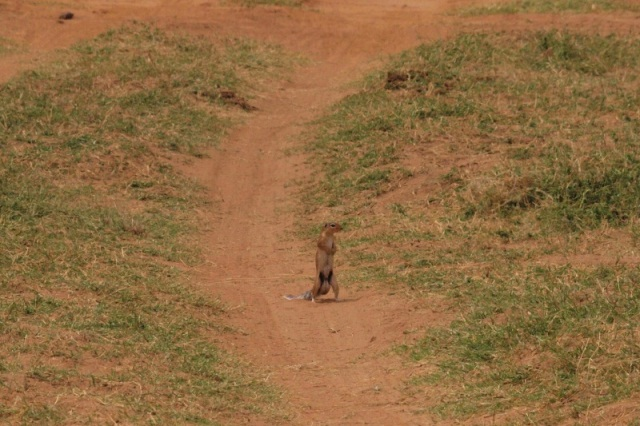 2012july27_samburu_farst_drive_unst