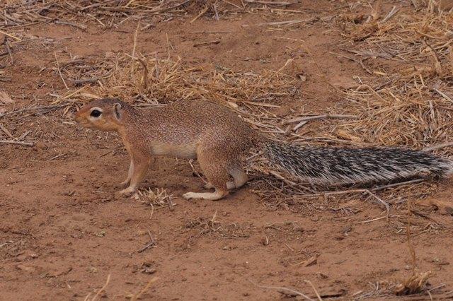 2012july27_samburu_farst_drive_un_2