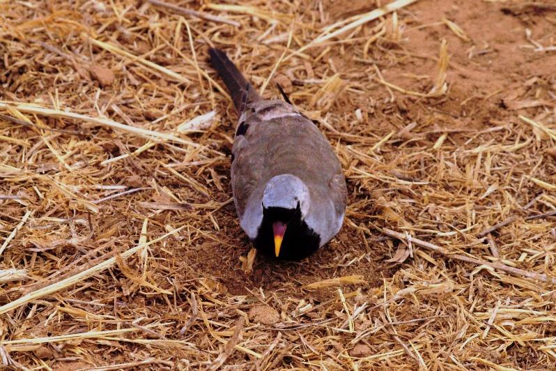 2012july27_samburu_evening_drive042