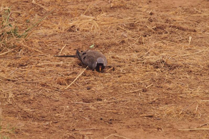 2012july27_samburu_evening_drive046