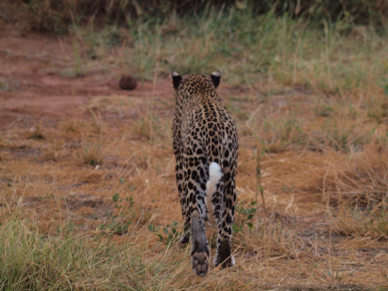 2012july27_samburu_evening_drive__5