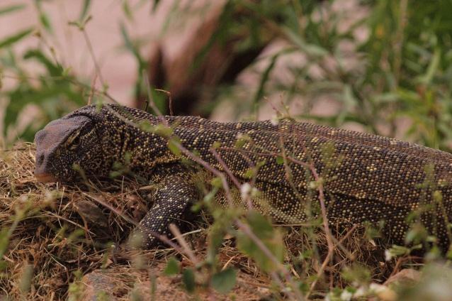 2012july27_samburu_game_lodge_nil_3