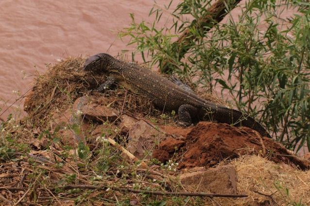 2012july27_samburu_game_lodge_nile_