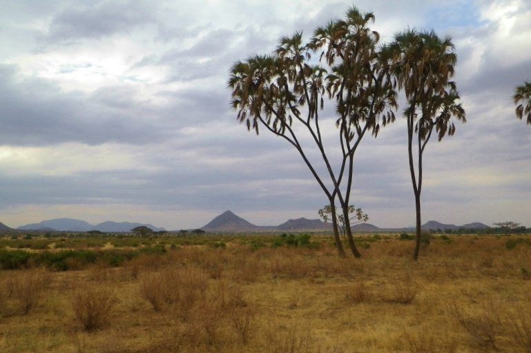 2012july27_samburu_evening_drive35
