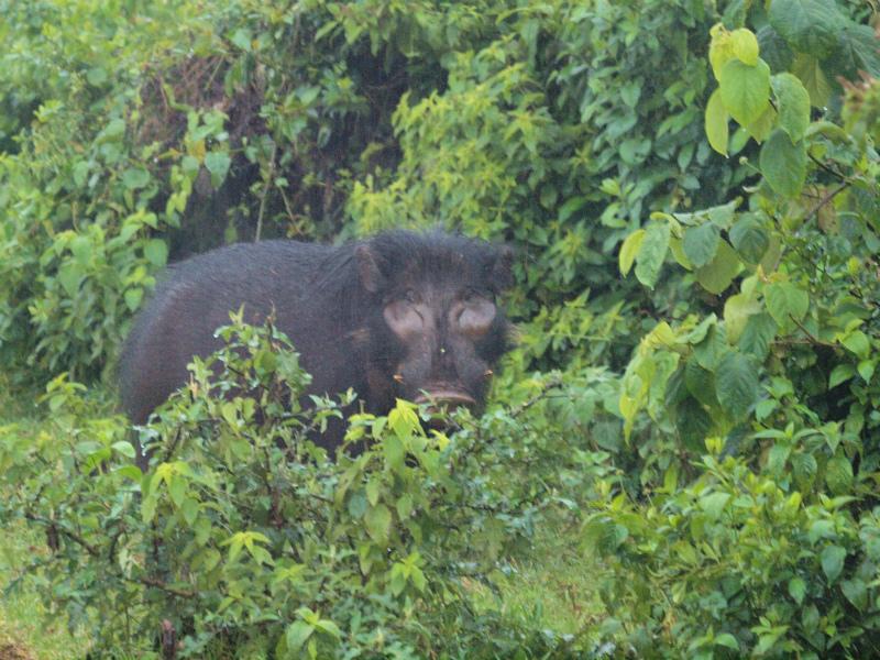 2012july29_aberdareark_safari79
