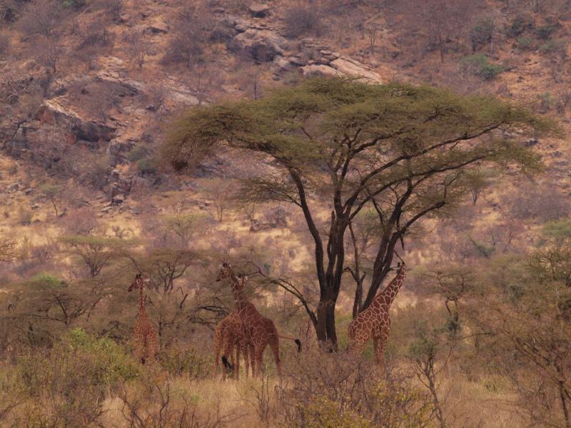 2012july27_samburu_farst_drive_reti