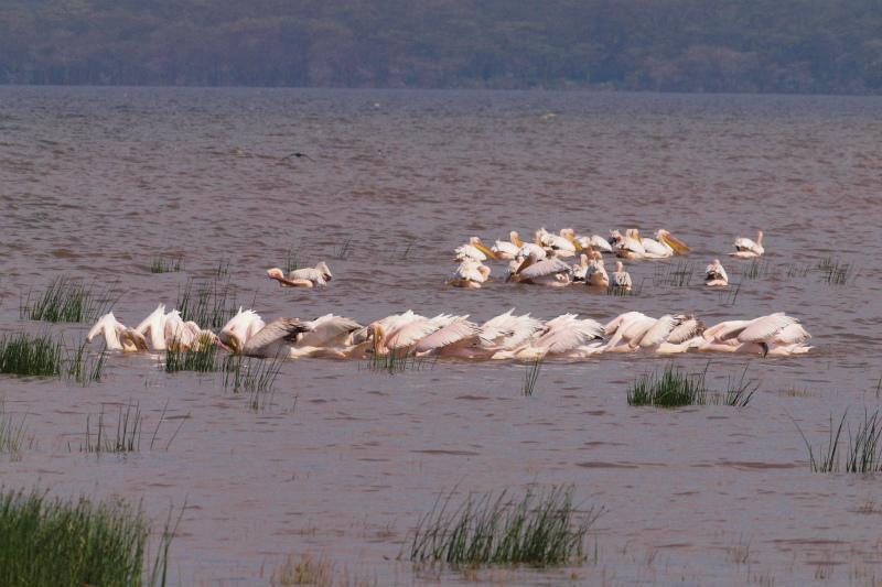 2012july30_lake_nakurunp245