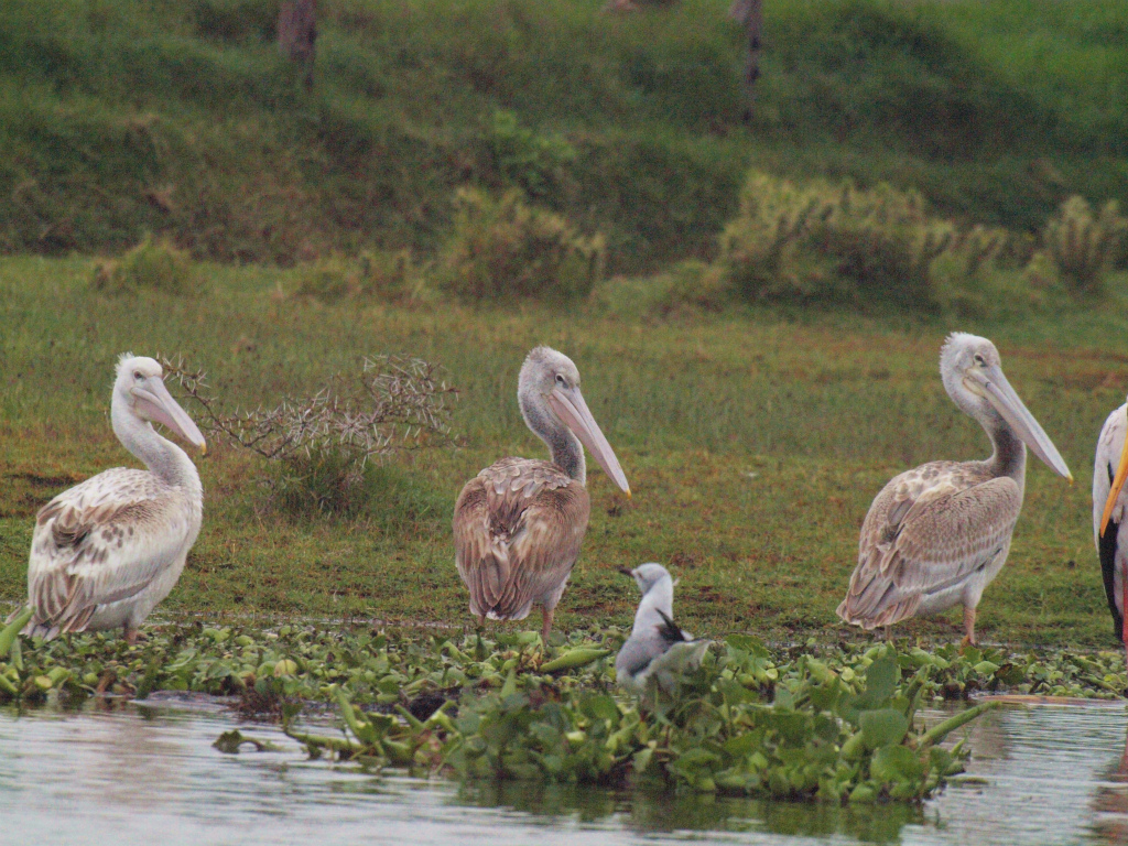 2012july31_lake_naivasha_boatsafa_6