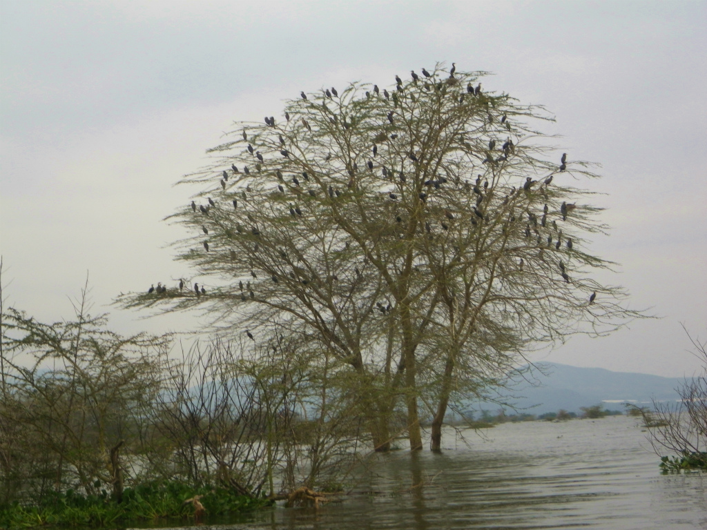 2012july31_lake_naivasha_boat_safar