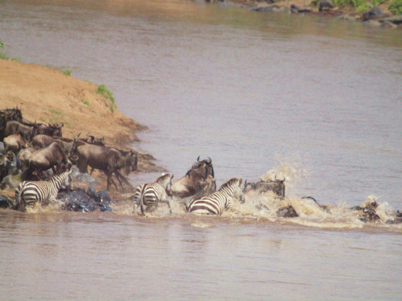 2012aug01_masai_mara_river126