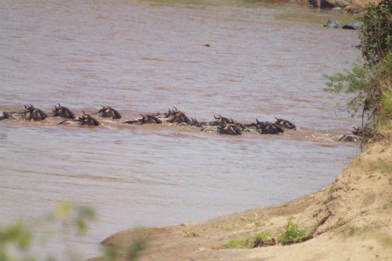 2012aug01_masai_mara_river129