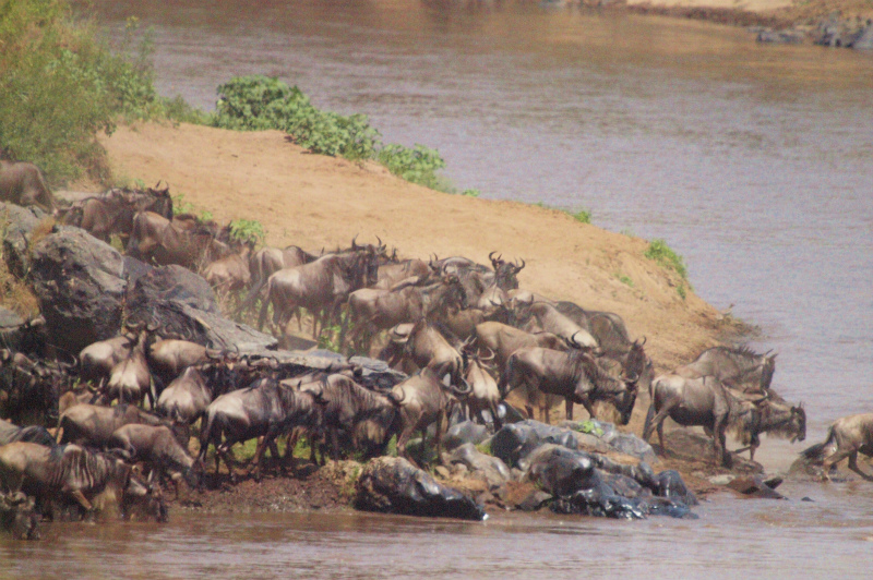 2012aug01_masai_mara_river139