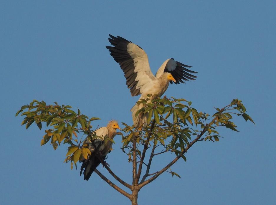 2013_1230_nepal0900